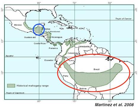 mahogany-brazil-peru-central-america